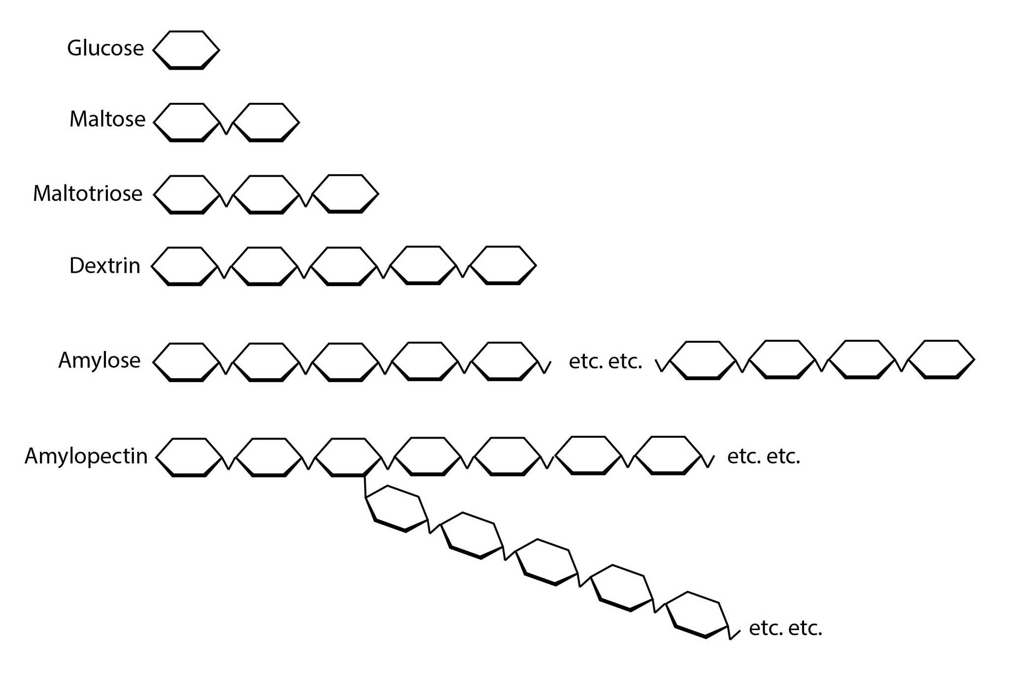 diagram of various starch molecules